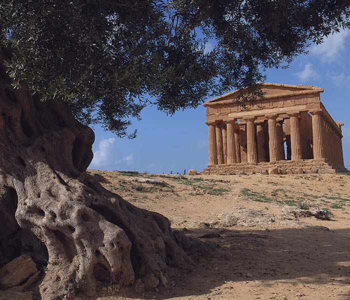 luxo-sicilia-agrigento-albero