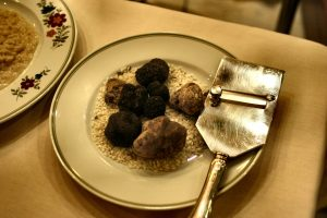 truffle hunting piedmont